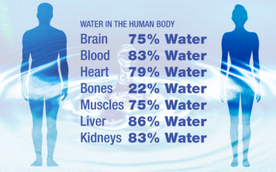 How does water affect the human body?