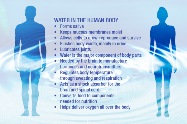 How does water affect the human body